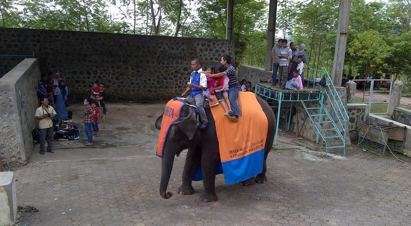 https: img-o.okeinfo.net content 2015 07 22 406 1183819 serunya-keliling-naik-gajah-way-kambas-di-pekalongan-8il2PRJFv2.jpg