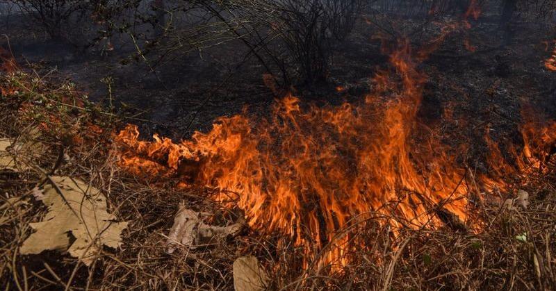 https: img-o.okeinfo.net content 2015 10 26 519 1238103 kebakaran-hutan-di-semeru-meluas-capai-50-hektare-fJwRcyVdKG.jpg