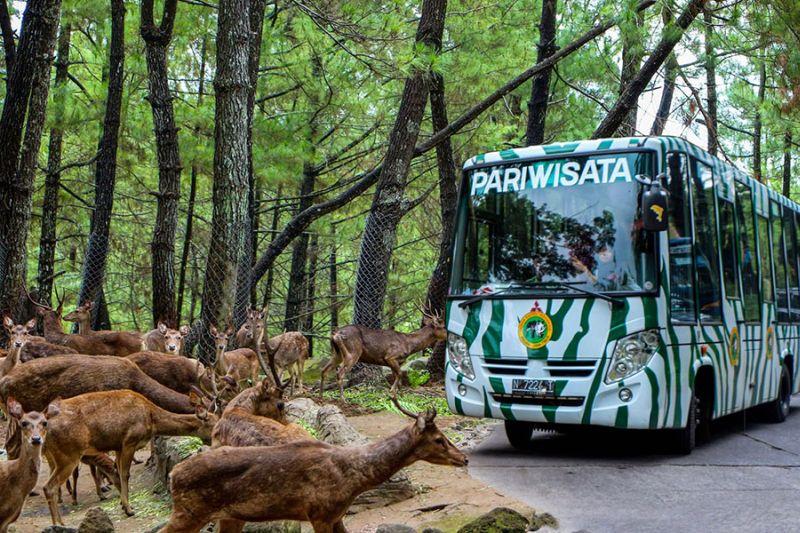 https: img-o.okeinfo.net content 2016 01 31 406 1301263 taman-safari-indonesia-kehadiran-4-hewan-di-2016-L7Pg6N48sJ.jpg