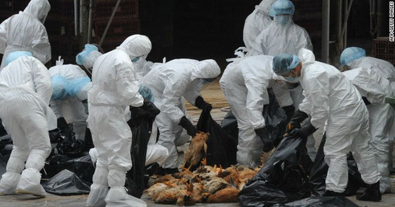 https: img-o.okeinfo.net content 2016 03 21 338 1342000 diduga-ada-virus-flu-burung-dinas-peternakan-sisir-daerah-jaksel-ZECN3wRA9r.jpg