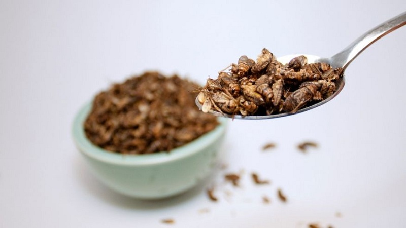 https: img-o.okeinfo.net content 2016 11 07 481 1534933 makan-serangga-lebih-sehat-daripada-daging-sapi-lho-Z7gkaKYzqs.jpg