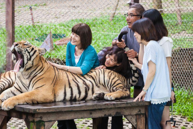 https: img-o.okeinfo.net content 2017 03 19 406 1646590 cara-mengatasi-serangan-harimau-saat-berwisata-ke-kebun-binatang-SC9Ils2TNR.jpg