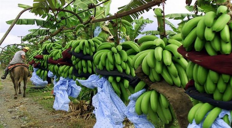 https img o okeinfo net content 2017 05 05 320 1684604 inspirasi bisnis bisnis pisang goreng kipas beromzet rp30 juta per harinya qyfNKEGEwr jpg