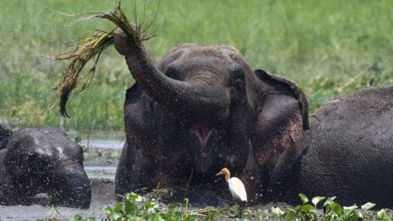https: img-o.okeinfo.net content 2017 06 19 18 1719975 tewas-ditabrak-bayi-gajah-dibiarkan-tergeletak-di-pinggir-jalan-Gy8buEHdIG.jpg