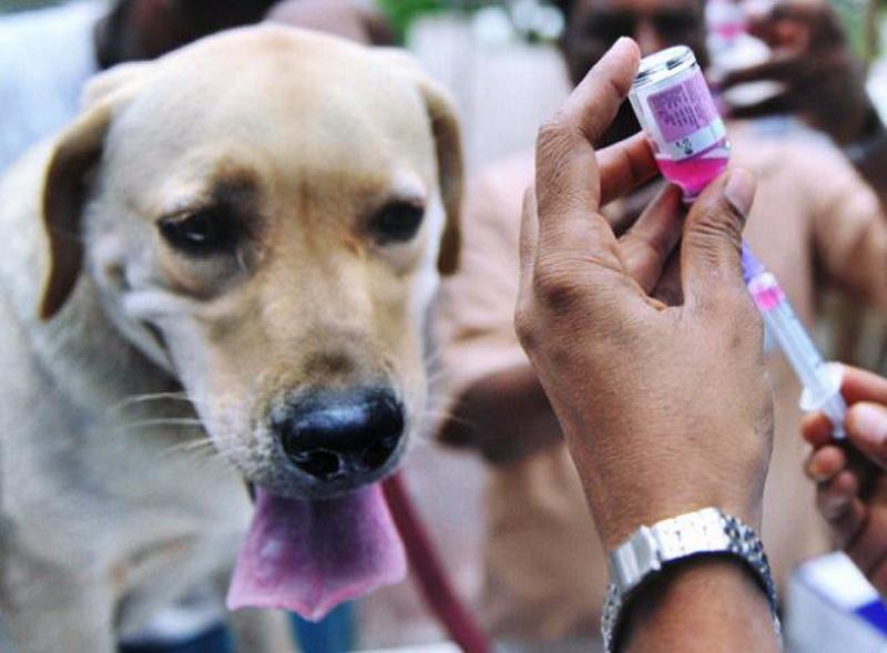 https: img-o.okeinfo.net content 2017 07 11 340 1733353 13-persen-hewan-pembawa-rabies-di-denpasar-belum-divaksinasi-apa-langkah-pemerintah-WtSK6JaNZK.jpg