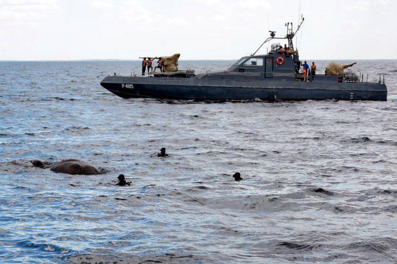 https: img-o.okeinfo.net content 2017 07 13 18 1735412 al-sri-lanka-selamatkan-gajah-yang-terjebak-di-laut-QXkB3P2iSi.jpg
