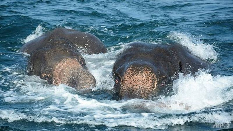 https: img-o.okeinfo.net content 2017 07 24 18 1742569 al-sri-lanka-kembali-selamatkan-gajah-yang-hanyut-di-laut-n1mNtx57ae.jpg