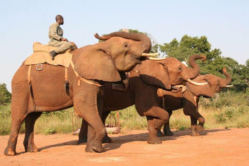 https: img-o.okeinfo.net content 2017 07 26 18 1743996 tragis-pawang-gajah-ini-tewas-terinjak-hewan-yang-dirawatnya-gUflvE87tt.jpg