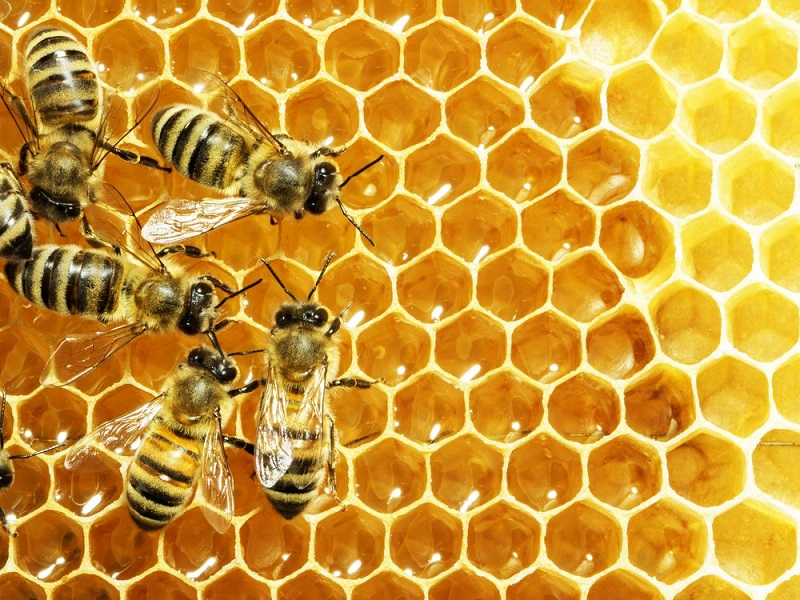 https: img-o.okeinfo.net content 2017 07 31 481 1746925 keren-mahasiswa-unair-teliti-madu-lebah-apis-dorsata-bisa-cegah-osteoporosis-4SssAx5dHX.jpg