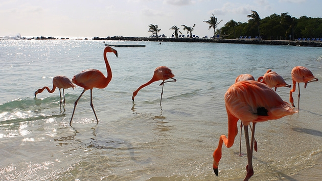 https: img-o.okeinfo.net content 2017 08 11 406 1754371 keren-di-pantai-aruba-wisatawan-bisa-bermain-air-bareng-flamingo-zN6Q2jdLdy.jpg