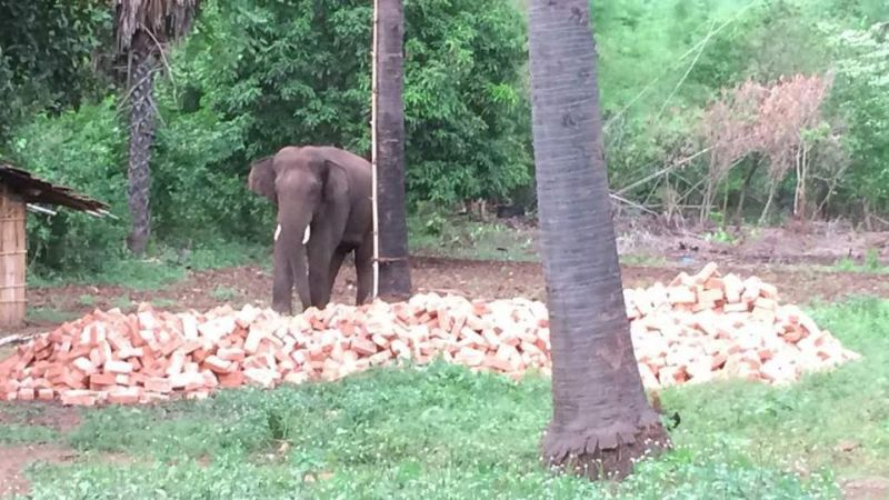 https: img-o.okeinfo.net content 2017 08 13 18 1755121 duuh-tewaskan-15-orang-gajah-di-india-dijatuhi-hukuman-mati-GE733Ilzzd.jpg