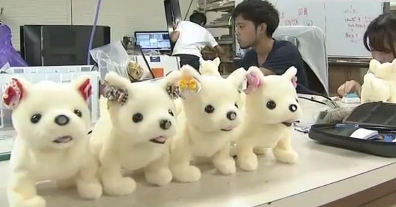 https: img-o.okeinfo.net content 2017 09 10 207 1773007 unik-robot-anjing-ini-bisa-pingsan-saat-cium-bau-kaki-kok-bisa-qtFFLwwEBX.jpg