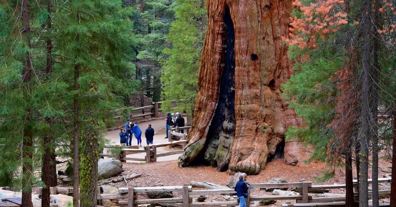 https: img-o.okeinfo.net content 2017 10 10 337 1792815 ini-dia-pohon-pohon-raksasa-di-dunia-nomor-dua-ada-di-indonesia-KQ39UHBZRE.jpg