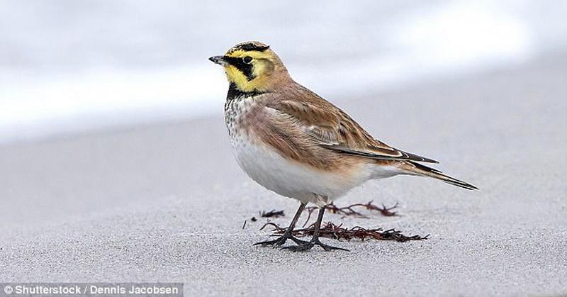 https: img-o.okeinfo.net content 2017 10 12 56 1794196 peneliti-temukan-bulu-burung-bisa-lacak-polusi-udara-nih-buktinya-eZEVQsU40c.jpg