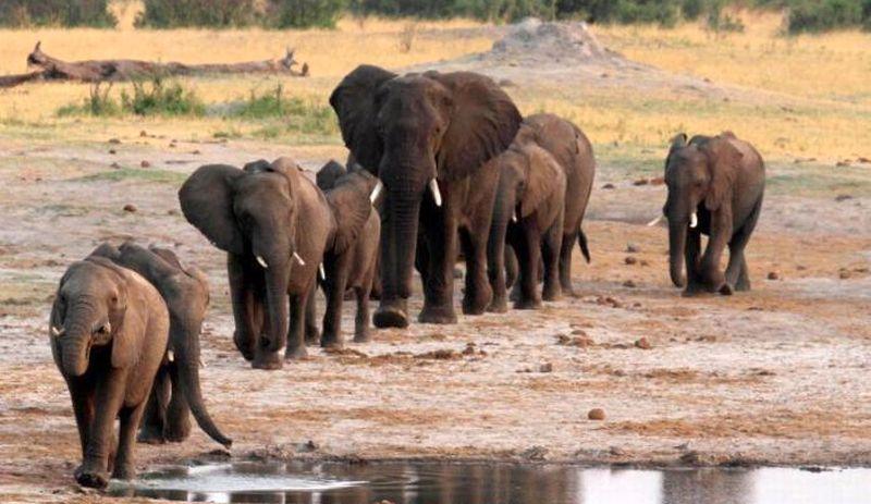 https: img-o.okeinfo.net content 2017 11 13 18 1813348 niat-bersafari-turis-belgia-dan-belanda-tewas-diinjak-gajah-di-zambia-LS4d3PnvF4.jpg
