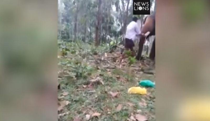 https: img-o.okeinfo.net content 2017 11 14 18 1814114 coba-panjat-tubuh-gajah-remaja-ini-dilempar-ke-udara-O0QJfgLGEf.jpg
