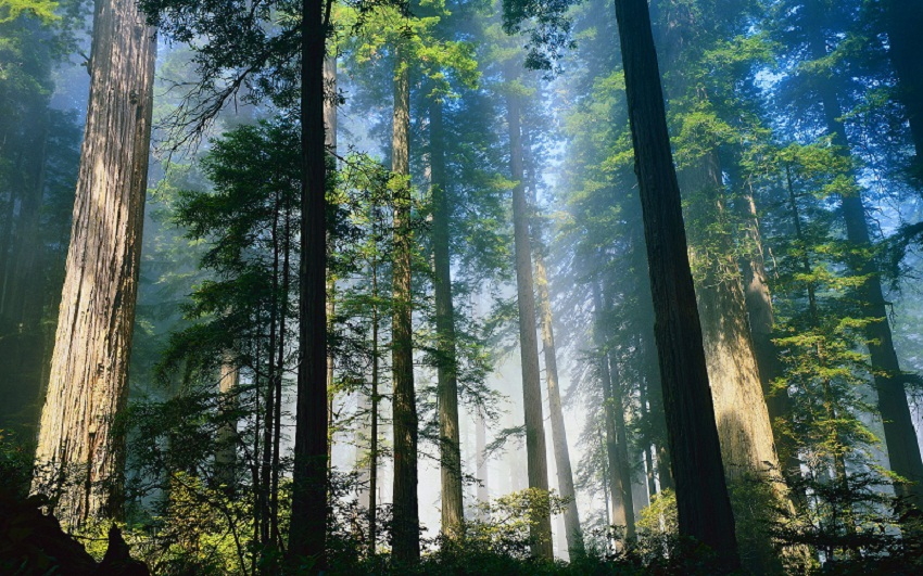 https: img-o.okeinfo.net content 2017 11 17 337 1816107 kenali-5-jenis-hutan-di-indonesia-rPsDew58IM.jpg