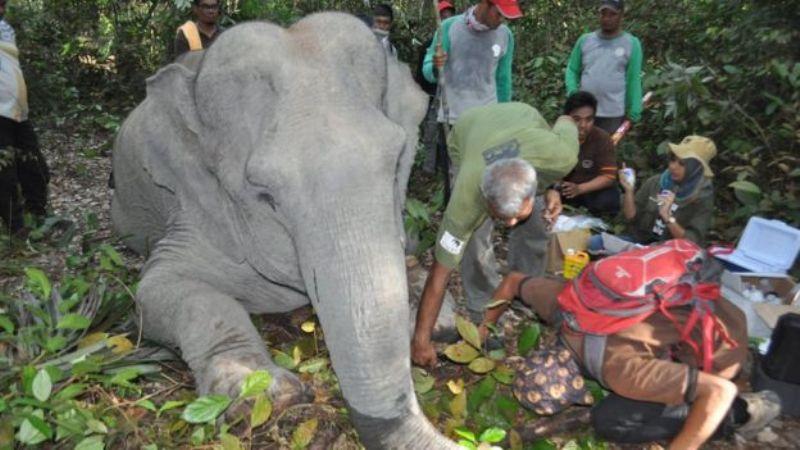 https: img-o.okeinfo.net content 2017 11 23 406 1819567 konflik-manusia-dan-gajah-masif-terjadi-di-riau-begini-tim-dokter-selamatkan-gajah-yang-terluka-RPgZj44FGr.jpg