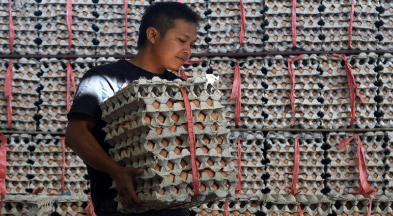 https: img-o.okeinfo.net content 2017 12 18 320 1832334 harga-ayam-dan-telur-naik-jadi-sorotan-mendag-kenaikannya-masih-dalam-batas-toleransi-5LFkB3GFPV.jpg