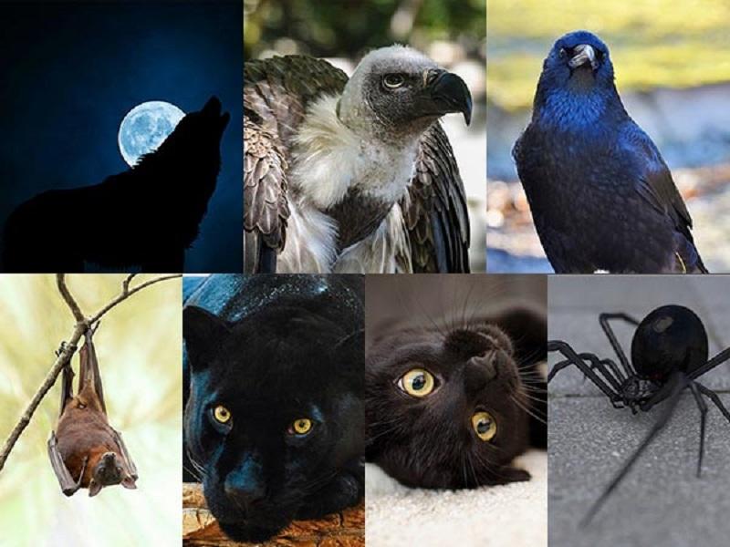 https: img-o.okeinfo.net content 2018 01 03 196 1839419 pilih-salah-satu-6-hewan-ini-bisa-ketahui-sisi-gelap-kepribadian-anda-GXlgT4uhS0.jpg