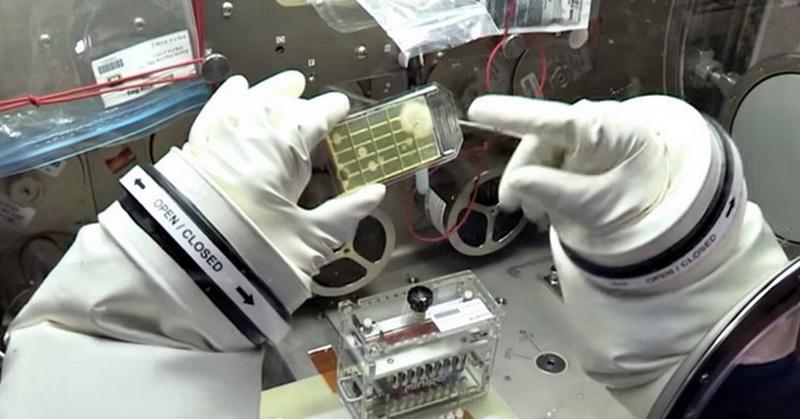 https: img-o.okeinfo.net content 2018 01 03 56 1839418 astronot-identifikasi-mikroba-di-luar-angkasa-untuk-pertama-kalinya-dUooULy513.jpg