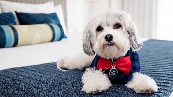 https: img-o.okeinfo.net content 2018 01 10 406 1842726 intip-kamar-hotel-berbintang-khusus-tempat-menginap-anjing-peliharaan-Jn5Zu8GtPh.jpg