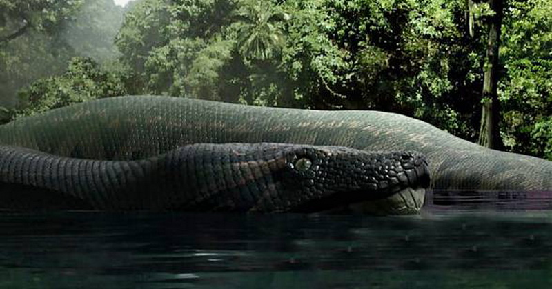 https: img-o.okeinfo.net content 2018 01 10 56 1843156 ular-raksasa-panjang-15-meter-hidup-di-hutan-hujan-tropis-vtLaSstUDa.jpg