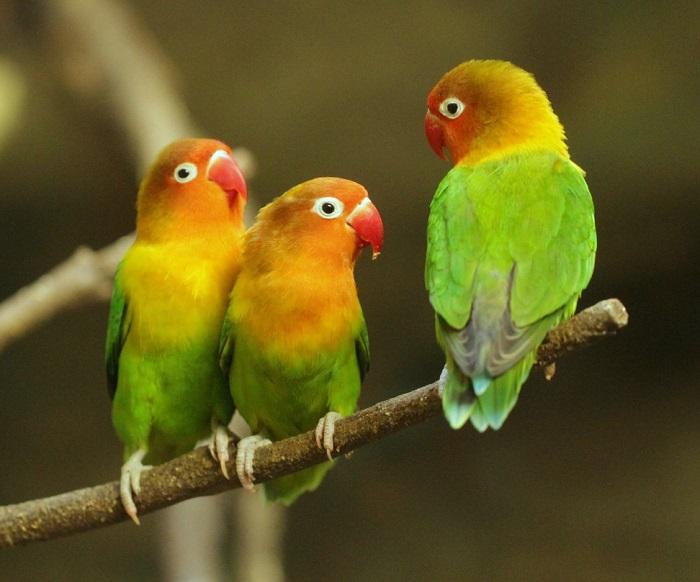 https: img-o.okeinfo.net content 2018 01 12 196 1844089 berkenalan-dengan-biji-ketapang-sf-komunitas-pencinta-burung-lovebird-eTl76vwdIh.jpg