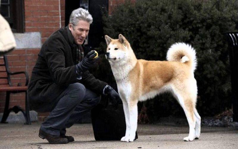 https: img-o.okeinfo.net content 2018 01 12 196 1844091 4-kisah-anjing-setia-pada-pemiliknya-bikin-menitikkan-air-mata-5U72tInKqs.jpg