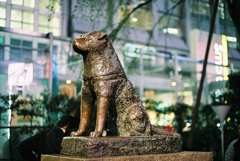 https: img-o.okeinfo.net content 2018 01 12 196 1844139 kisah-sedih-hachiko-anjing-setia-penunggu-stasiun-shibuya-wpogxp1pnM.jpg