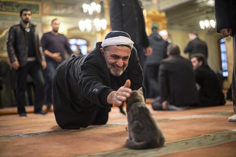 https: img-o.okeinfo.net content 2018 01 12 196 1844230 keistimewaan-kucing-hewan-kesayangan-rasulullah-saw-3XYeAFftH3.jpg