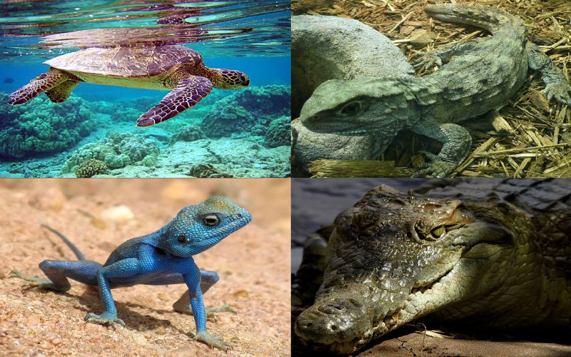 https: img-o.okeinfo.net content 2018 01 12 196 1844265 berkenalan-dengan-depok-reptile-amphibi-community-komunitas-pencinta-reptil-sgeFDZ0yJ2.jpg