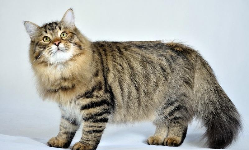 https: img-o.okeinfo.net content 2018 01 12 196 1844266 10-jenis-kucing-lucu-nan-menggemaskan-yang-cocok-dijadikan-peliharaan-G2had0nHRY.jpg