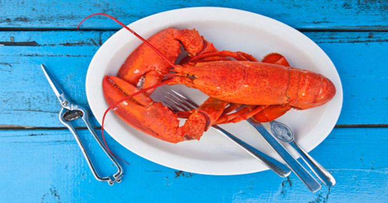 https: img-o.okeinfo.net content 2018 01 12 298 1844009 swiss-keluarkan-larangan-merebus-lobster-hidup-hidup-qjRVaXj49i.jpg