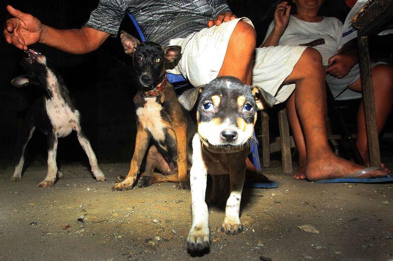 https: img-o.okeinfo.net content 2018 01 12 298 1844078 dibunuh-dengan-disiksa-segera-tandatangani-petisi-stop-konsumsi-daging-anjing-di-seluruh-indonesia-tiECmBRU1p.jpg