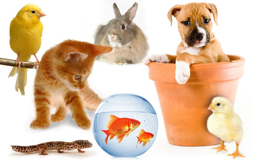 https: img-o.okeinfo.net content 2018 01 12 481 1844220 memelihara-hewan-di-rumah-ternyata-bisa-menghilangkan-stres-Ut0Lm6Nc5V.jpg