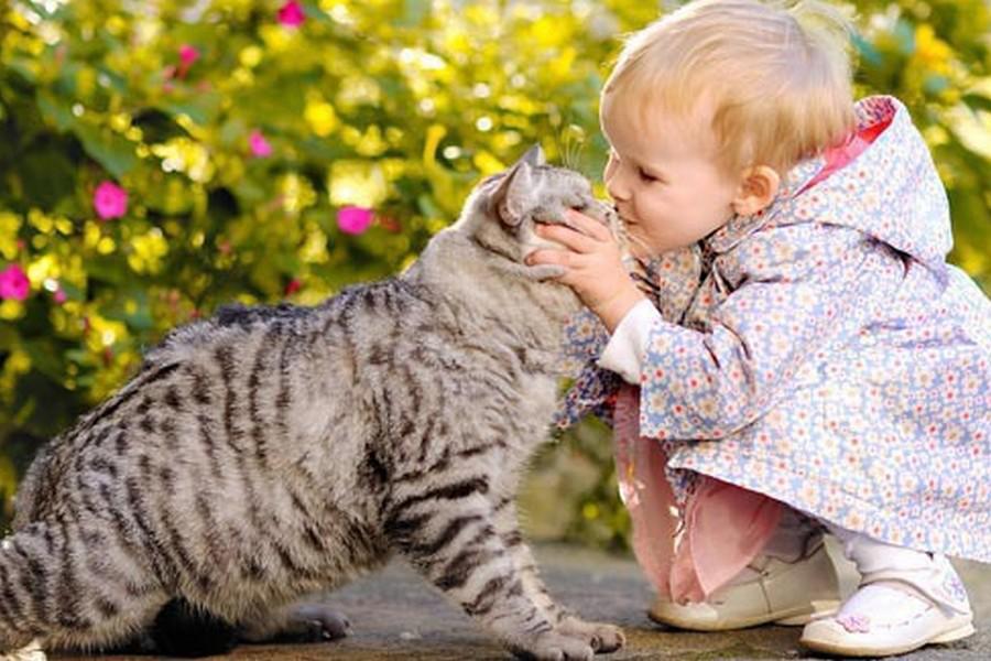 https: img-o.okeinfo.net content 2018 01 13 196 1844442 gemas-intip-video-lucu-interaksi-bayi-dengan-hewan-peliharaan-29eT3N4Zy5.png