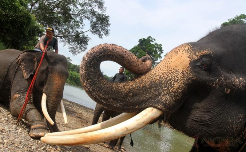 https: img-o.okeinfo.net content 2018 01 20 340 1847780 gajah-serang-tanaman-petani-pemerintah-diminta-tetapkan-batasan-kawasan-hutan-lindung-Rm9xrQusZ9.jpg
