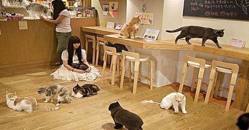 https: img-o.okeinfo.net content 2018 02 03 298 1854192 asyiknya-kongkow-ditemani-kucing-kucing-cantik-di-lembang-9yep7pV6tw.jpg