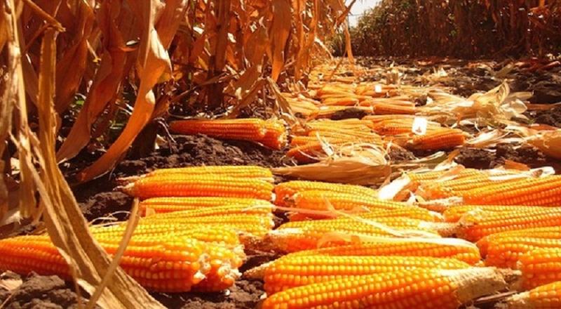 https: img-o.okeinfo.net content 2018 02 06 320 1855449 kemendag-akan-impor-jagung-khusus-industri-sebanyak-171-000-ton-j37duvKWhK.jpg