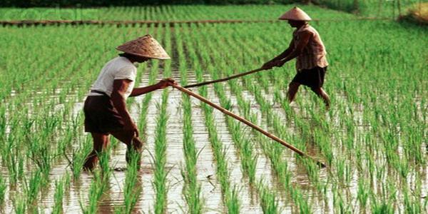 https: img-o.okeinfo.net content 2018 02 07 320 1855902 pasokan-beras-menyusut-lahan-pertanian-pun-berubah-jadi-hunian-afLIPbRQPX.jpg