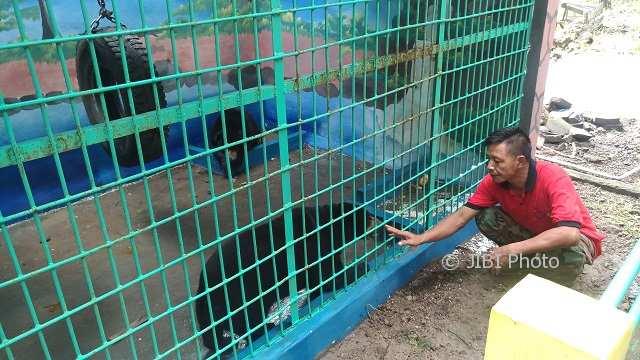 https: img-o.okeinfo.net content 2018 02 09 406 1857289 ada-yang-baru-di-ndayu-park-sepasang-beruang-madu-dari-kalimantan-Jj8OjutQEF.jpg