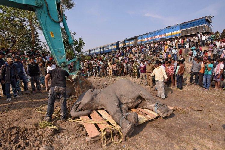 https: img-o.okeinfo.net content 2018 02 12 18 1858457 empat-ekor-gajah-mati-ditabrak-kereta-di-india-P2FT6qPfMV.jpg