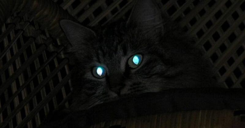 https: img-o.okeinfo.net content 2018 02 12 56 1858587 mengapa-mata-kucing-menyala-di-malam-hari-T8Kt4XMYd5.jpg