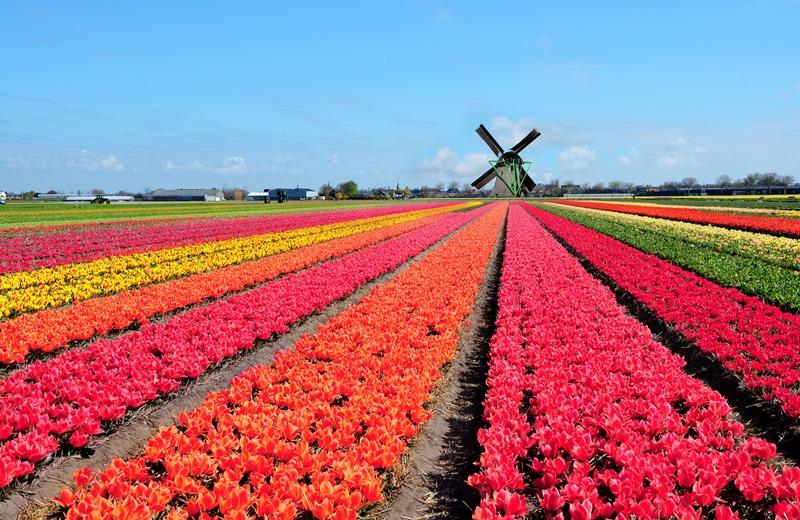 https: img-o.okeinfo.net content 2018 02 13 406 1859031 festival-keukenhof-belanda-pesona-hamparan-bunga-tulip-cantik-dan-megah-bswqn2hHjp.jpg