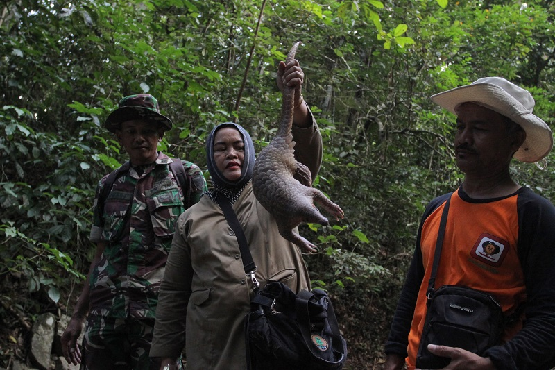 https: img-o.okeinfo.net content 2018 02 14 406 1859565 3-satwa-yang-diamankan-dari-warga-dilepasliarkan-di-hutan-aceh-uKSKZ1KsEy.jpg
