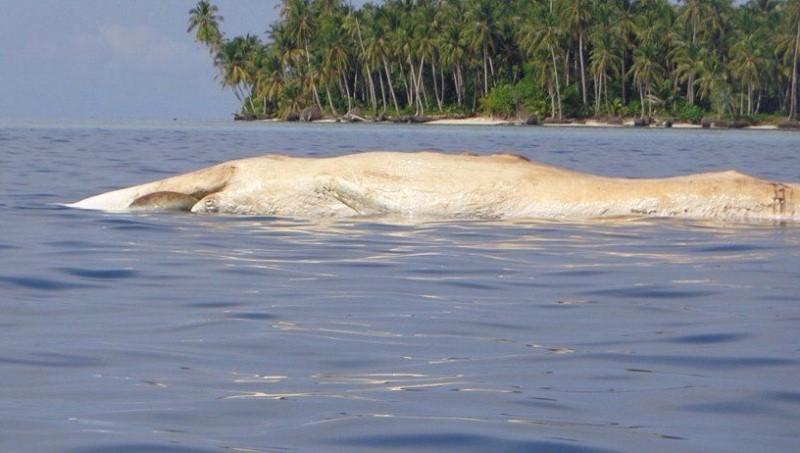 https: img-o.okeinfo.net content 2018 02 20 340 1861835 paus-sepanjang-7-meter-ditemukan-mati-di-pulau-banyak-aceh-v8m9Wgj2Ts.jpg