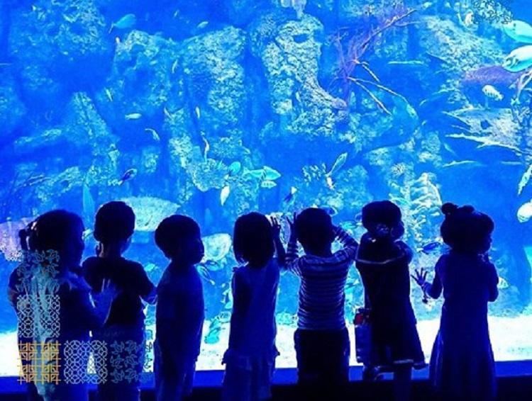 https: img-o.okeinfo.net content 2018 02 23 406 1863958 liburan-seru-ajak-anak-mengenal-600-jenis-biota-laut-indonesia-Oj2FjYTTTo.jpg