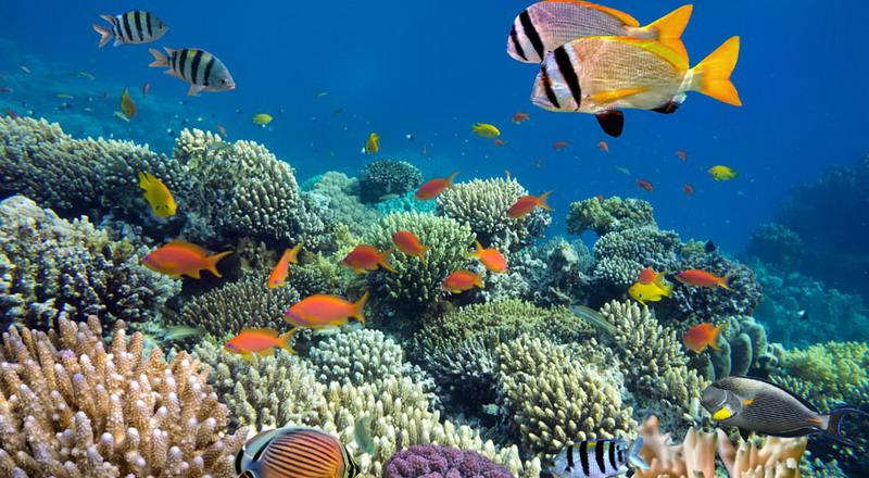 https: img-o.okeinfo.net content 2018 02 26 406 1864633 cantiknya-surga-dasar-laut-biluhu-penuh-dengan-ikan-nemo-dan-dori-YlutX2WaeZ.jpg