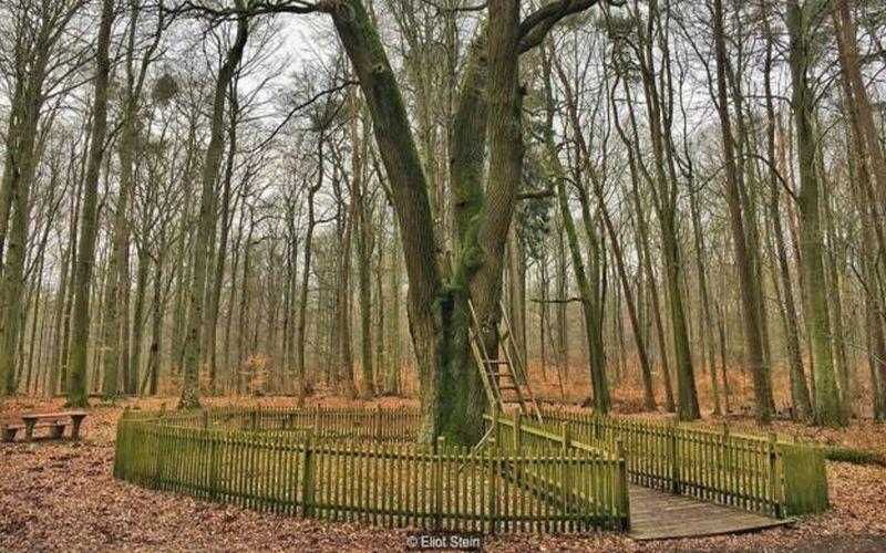https: img-o.okeinfo.net content 2018 02 27 406 1865334 kisah-lubang-batang-pohon-ajaib-yang-menyatukan-ratusan-pasangan-di-jerman-PASBHSbPRj.jpg